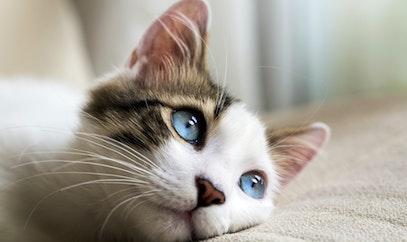 ¡Esto es lo que NO hay que hacerle a un gato!